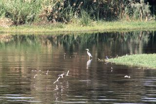 Nile Cruise Heron