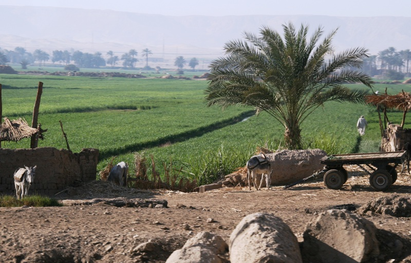 Bucolic Egypt