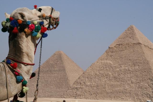 Tourist Camel