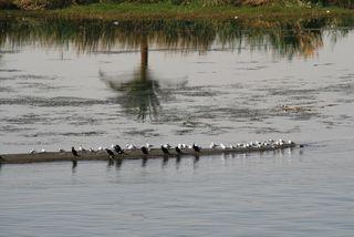 Nile Cruise Birds