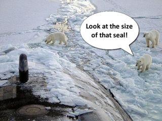 Polar_bear_amplification