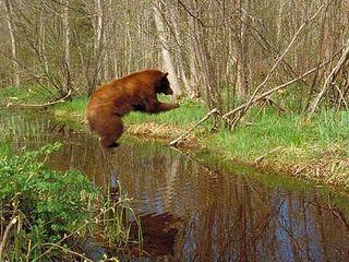 BearsJump