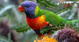 Drunk-Parrots-Falling-From-Sky-570x304