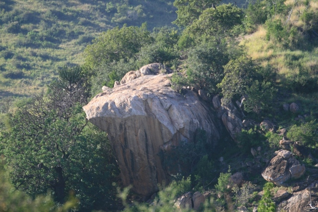 Borana_pride_rock_from_lion_king