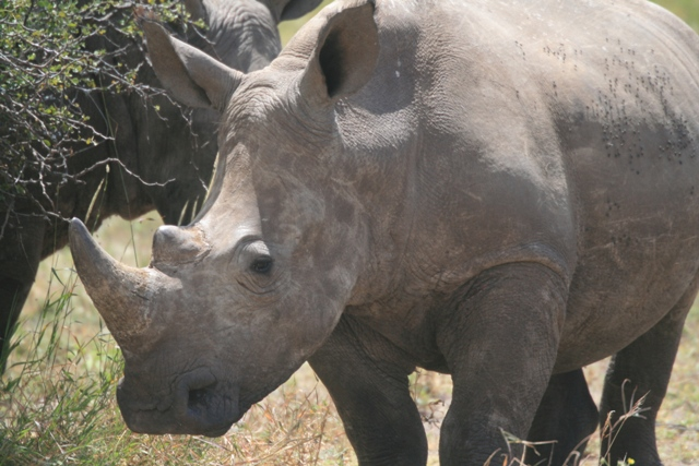 Borona_lodge_rhino_widemouth