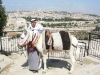 Jerusalem_tourist_donkey_1